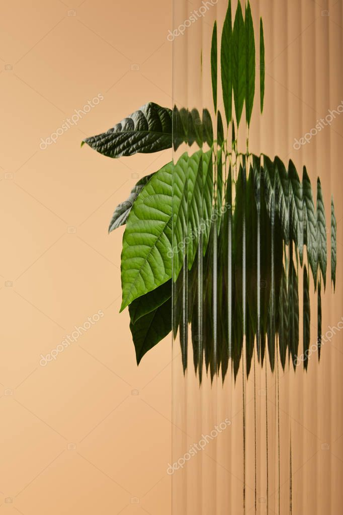 green leaves of plant behind reed glass isolated on beige