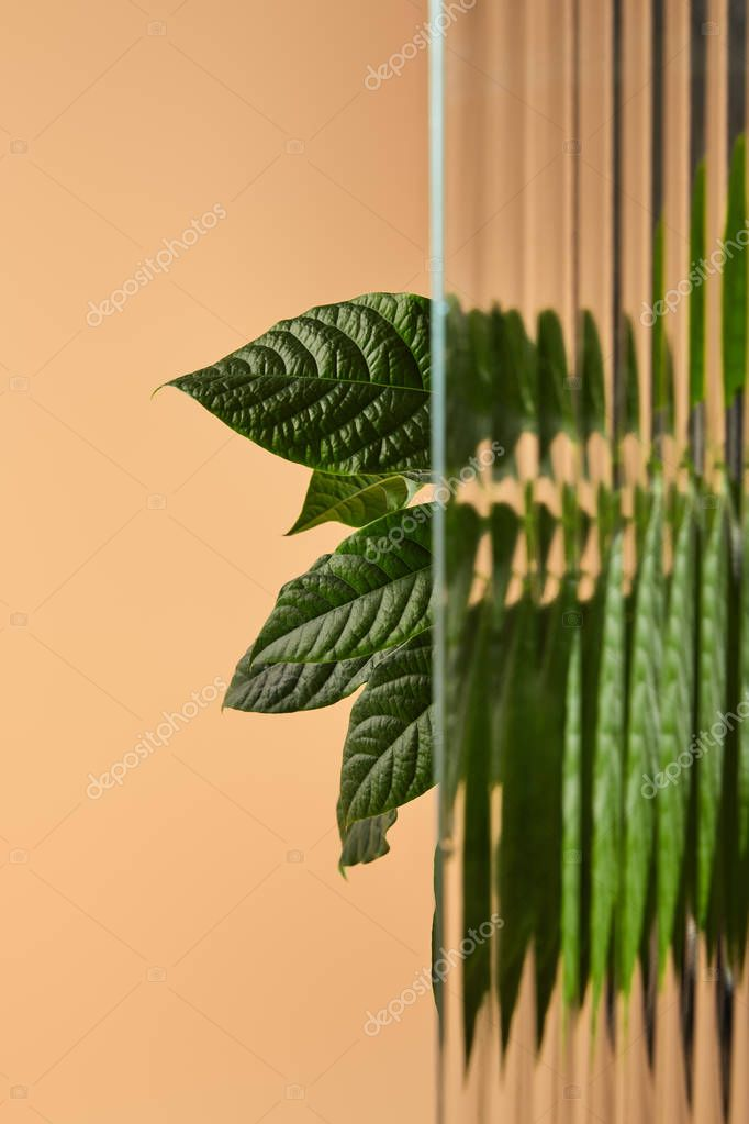 big leaves of plant behind reed glass isolated on beige