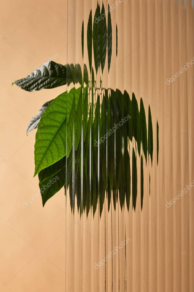 leaves of avocado tree behind glass isolated on beige