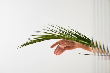 cropped view of woman holding palm tree leaf on white background behind reed glass