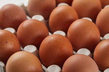 Selective focus of chicken eggs in carton box stock vector
