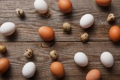 Fotografie  top view of quail and chicken eggs on wooden table