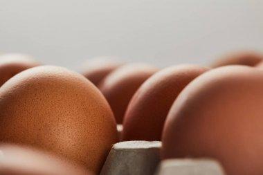 selective focus of chicken eggs in carton box