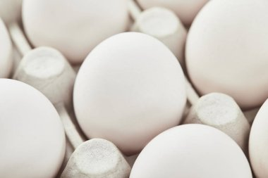 Set of white chicken eggs in carton box stock vector