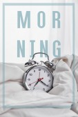 Fotografia sveglia dargento in coperta in letto bianco con illustrazione mattina