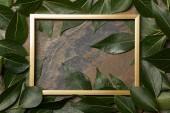 Fotografie Ansicht des goldenen Rahmens auf Steinhintergrund mit Kopierraum und grünen Blättern