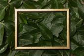leerer goldener Rahmen auf grün nassem, frischem Laubhintergrund mit Kopierraum
