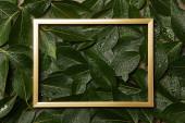 leerer goldener Rahmen auf grünem, feuchtem Laubgrund mit Kopierraum