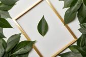 leerer goldener Rahmen auf weißem Hintergrund mit Kopierraum und grünen Blättern