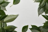 zelené čerstvé listy roztroušené na bílém pozadí s prostorem pro kopírování