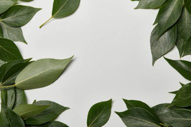 Green fresh leaves scattered on white background with copy space stock vector