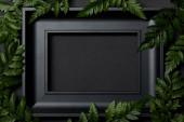 horní pohled na prázdný černý rámeček na černém pozadí s prostorem pro kopírování a zelenou listím