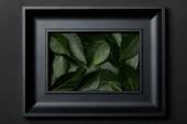 pohled shora na černý rámeček se zelenými listy na černém pozadí