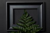 horní pohled na prázdný černý rámeček na černém pozadí s prostorem pro kopírování a zeleným listem s kapradí