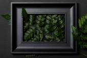 pohled na černý rám se zelenými listy s kapradí na černém pozadí