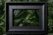 Ansicht von oben schwarzer Rahmen auf grünem Hintergrund