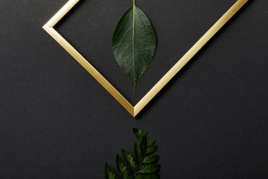 Top view of empty golden frame on black background with copy space and leaves stock vector