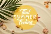 pohled na zelený Palmový list blízko červených hvězd a mušlí na písečné pláži s letním pocitem
