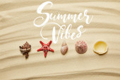 flat lay of seashells and red starfish on sandy beach in summertime with summer vibes illustration
