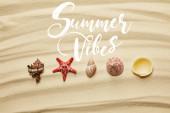 lapos tengeri kagylókból és vörös csillag homokos strandon a nyáron Vibes illusztráció