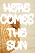 selektivní zaměření mušlí na pláži se zlatým pískem a tady je slunce, ilustrace