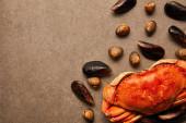 Draufsicht auf verstreute Herzmuscheln und Muscheln in der Nähe roher Krabben auf strukturierter Oberfläche