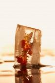 Nahaufnahme eines transparenten Eiswürfels mit gefrorener Blume auf gelb beleuchtetem Hintergrund