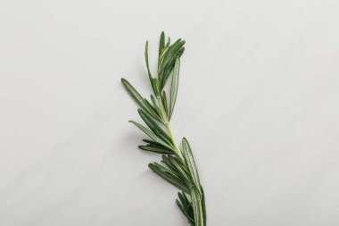 Top view of fresh rosemary twig on white background stock vector