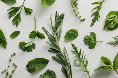 Top view of arugula, basil, cilantro, dill, parsley, rosemary and thyme sprigs on white background