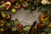 top view of parchment paper with fresh apples and leaves