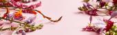 Fotografie panoramatický záběr rozličných divokých květin na růžovém pozadí