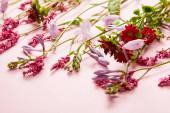 malé větvičky čerstvých divokých květin na růžovém pozadí