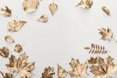 pohled na zlatý listoví na bílém pozadí