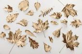 Ansicht der goldenen Blätter auf weißem Hintergrund