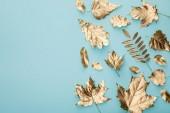 pohled na automatický zlatý listoví na modrém pozadí s prostorem pro kopírování