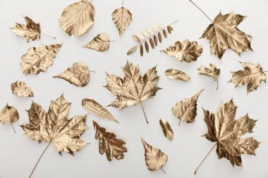 Top view of golden leaves on white background stock vector