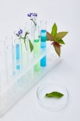 Photo glass test tubes with liquid near plants on white table