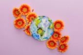 top view narancs gerbera virágok és festett bolygó Föld ibolya háttér