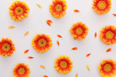 Fotografie top view of orange gerbera flowers with petals on white background