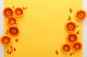 top view of orange gerbera flowers with petals on yellow background