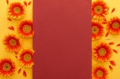 top view of orange gerbera flowers with petals and red empty card on yellow background