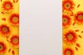 vrchní pohled na oranžové gerber květy s prázdným papírem na oranžovém pozadí