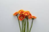 top view of orange gerbera flowers on white background with copy space