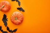top view of pumpkin, bats on orange background, Halloween decoration