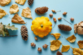 ripe whole colorful Pattypan squash and autumnal decor on blue background