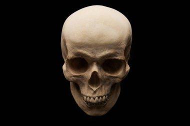 spooky human skull isolated on black, Halloween decoration
