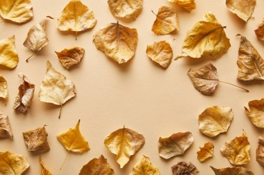 Top view of dry golden foliage on beige background with copy space stock vector