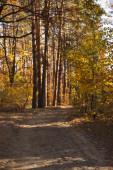 Bäume mit gelben und grünen Blättern im herbstlichen Park am Tag