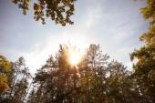 Sonne, Bäume mit gelben und grünen Blättern im herbstlichen Park am Tag