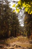 szelektív fókusz a fák zöld levelek őszi parkban nappal